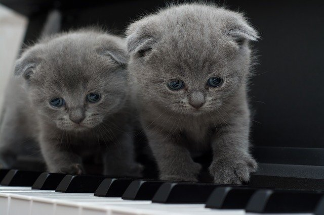 Two Kittens on a Piano